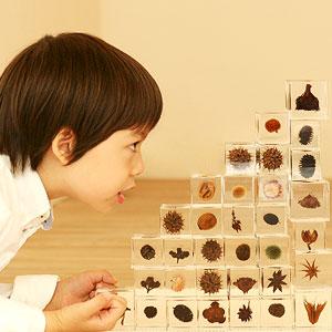 日本治愈植物标本立方体:宙 Sola Cube