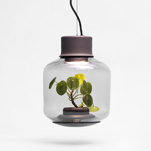 玻璃瓶里的自循环生态灯